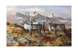 Cold Alaskan Ridge Wydruk giclee autor Trevor V. Swanson