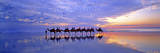 Cable Beach Camels Photographic Print by Wayne Bradbury