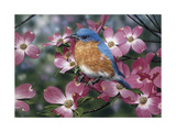 Bluebird/Pink Dogwood Giclee Print by William Vanderdasson