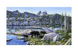 Black Bear Giclee Print by Jeff Tift