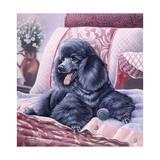 Black Poodle Giclee Print by Jenny Newland