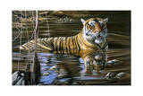 Cooling Off Bengal Tiger Giclee Print by Jeremy Paul