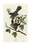 Catbird Giclee Print