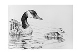 Canada Goose and Baby Giclee Print by Rusty Frentner