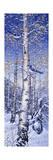Arrendajo azul Lámina giclée por Jeff Tift