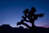 Desert Silence Photographic Print by Dan Ballard