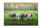 Curious Cows Reproduction procédé giclée par Bruce Dumas