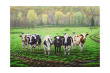 Curious Cows Giclee Print by Bruce Dumas