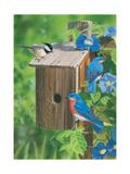 Birds at the Feeder (Bluebirds) Impression giclée par William Vanderdasson