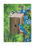 Birds at the Feeder (Bluebirds) Giclee Print by William Vanderdasson