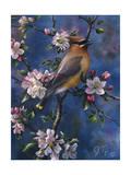 Cedar Waxwing Giclee Print by Jeff Tift