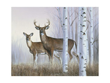 Deer in Birch Woods Giclee Print by Rusty Frentner