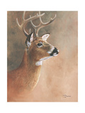 Deer Close-Up Giclee Print by Rusty Frentner