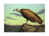 Buzzard Rock Reproduction procédé giclée par James W. Johnson