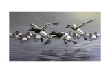 Canvasbacks Coming In Giclee Print by Wilhelm Goebel