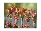 Cardinal and Lilies Impression giclée par William Vanderdasson