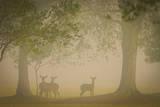 Deer Photographic Print by Dennis Goodman