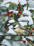 Chickadees and Holly Branch Giclee Print by William Vanderdasson