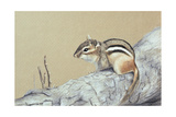 Chipmunk Giclee Print by Rusty Frentner