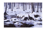 Hardwood Creek - Wild Turkeys Giclee Print by Wilhelm Goebel