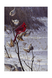 Cardinal and Milkweed Giclee Print by Wilhelm Goebel