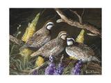 Bobwhite Trio 1 Giclee Print by Trevor V. Swanson