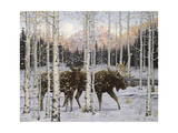 Forest Twilight Giclee Print by Jeff Tift