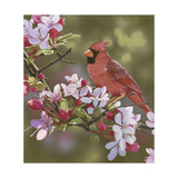 Cardinal with Apple Blossoms Impression giclée par William Vanderdasson