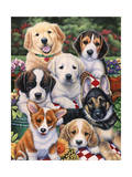 Garden Puppies Giclee Print by Jenny Newland