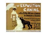 Exposition Canine Giclee Print