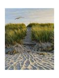 Dune Path Gull Giclee Print by Bruce Dumas