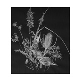 Dried Weeds Giclee Print by Rusty Frentner