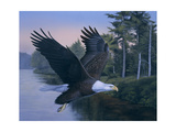 Eagle Soaring Giclee Print by Rusty Frentner