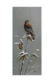 Gentle Snowfall - Kestrel Giclee Print by Wilhelm Goebel