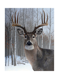 Deer Giclee Print by Rusty Frentner
