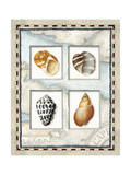 Four Kinds of Shells Giclee Print by Lisa Audit