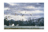 Geese Flying over Farmland Giclee Print by Jeff Tift
