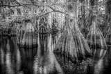 Gator Hook Photographic Print by Dennis Goodman