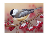 Chickadee with Berries Reproduction procédé giclée par William Vanderdasson