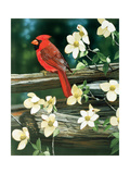 Rouge cardinal Impression giclée par William Vanderdasson