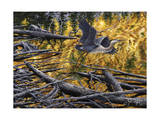 Heron Giclee Print by Jeff Tift