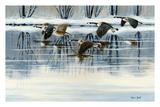 Bernaches en vol sur la riviére Affiches par Sylvia Audet