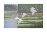 Flight of the Ibis Reproduction procédé giclée par Bruce Dumas