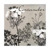 Flowering Herbs IV Giclee Print