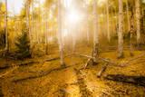 Fall Light Photographic Print by Dan Ballard