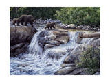 Entiat Falls-Grizzly Family Giclee Print by Jeff Tift
