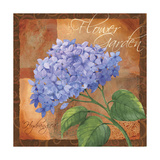 Hydrangea Giclee Print by Fiona Stokes-Gilbert