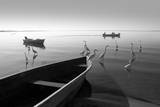 Herons and 3 Boats Photographic Print by Moises Levy