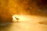 Glowing Mist Photographic Print by Dan Ballard