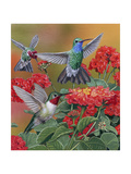 Hummingbirds and Flowers Impression giclée par William Vanderdasson